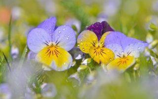 Faune et flore de Moyenne Montagne